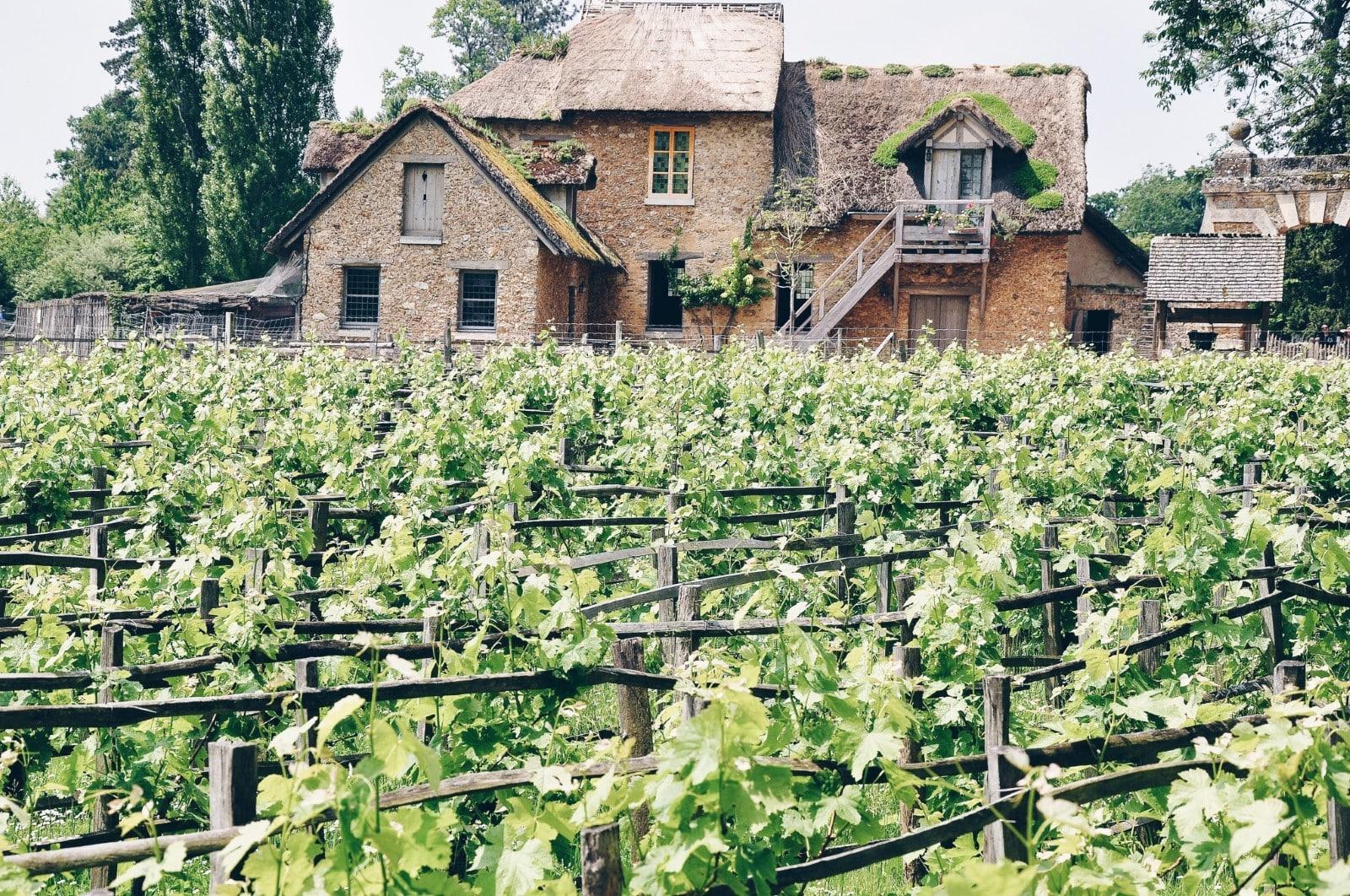 Campi coltivati nel Borgo della Regina