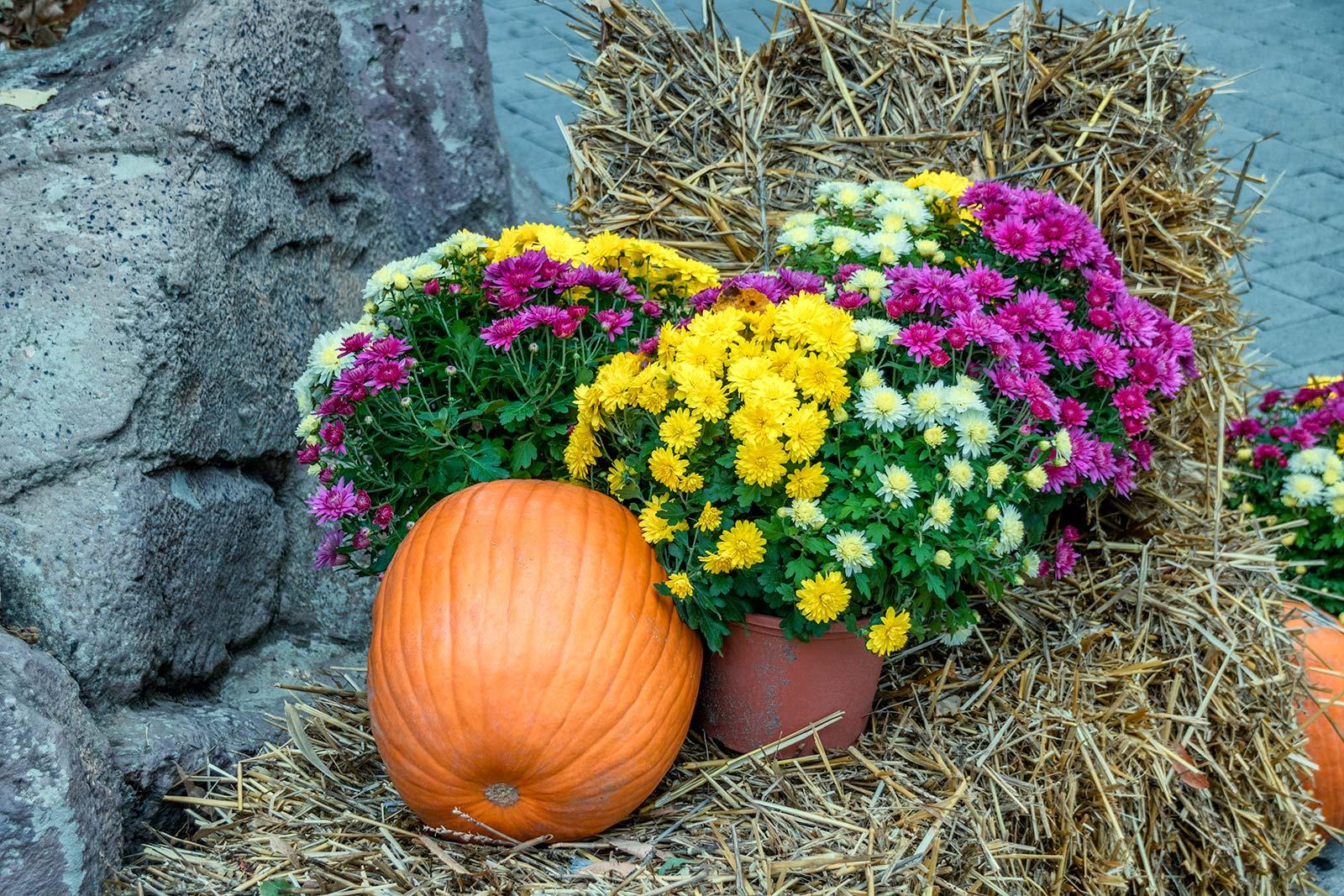 zucca tra i fiori