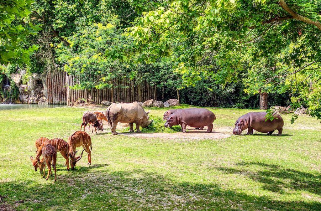 rinoceronti e ippopotami