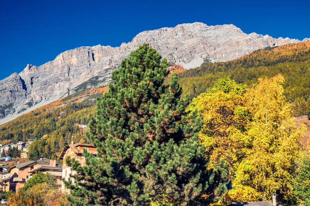natura in Valtellina