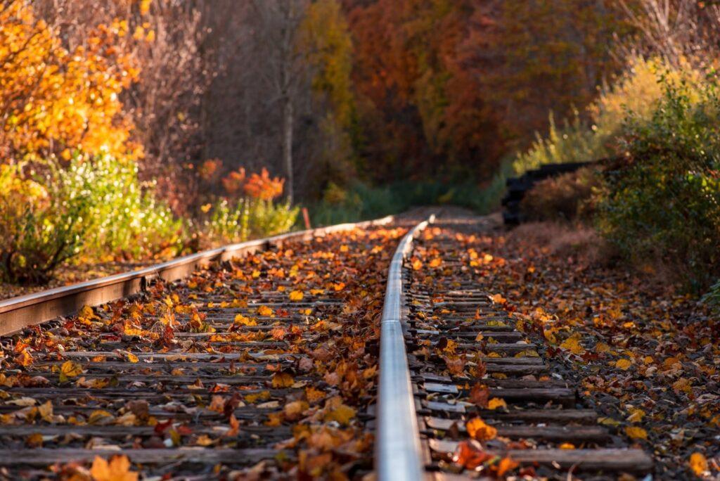 treno nei boschi