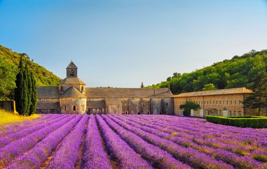 L'abbazia di Senanque con la lavanda in fiore