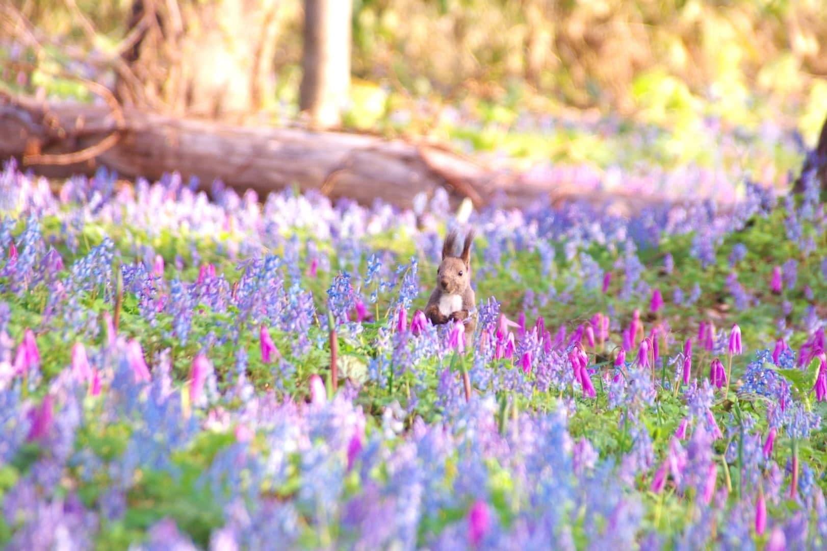 fioriture primaverili