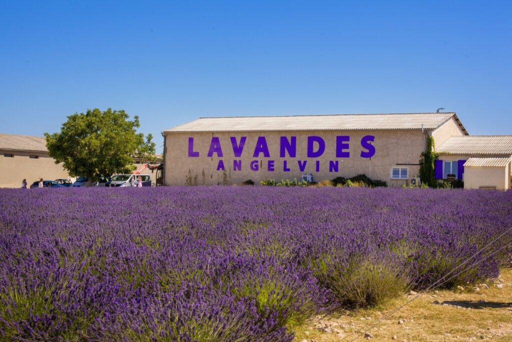 distilleria Lavandes Angelvin.
