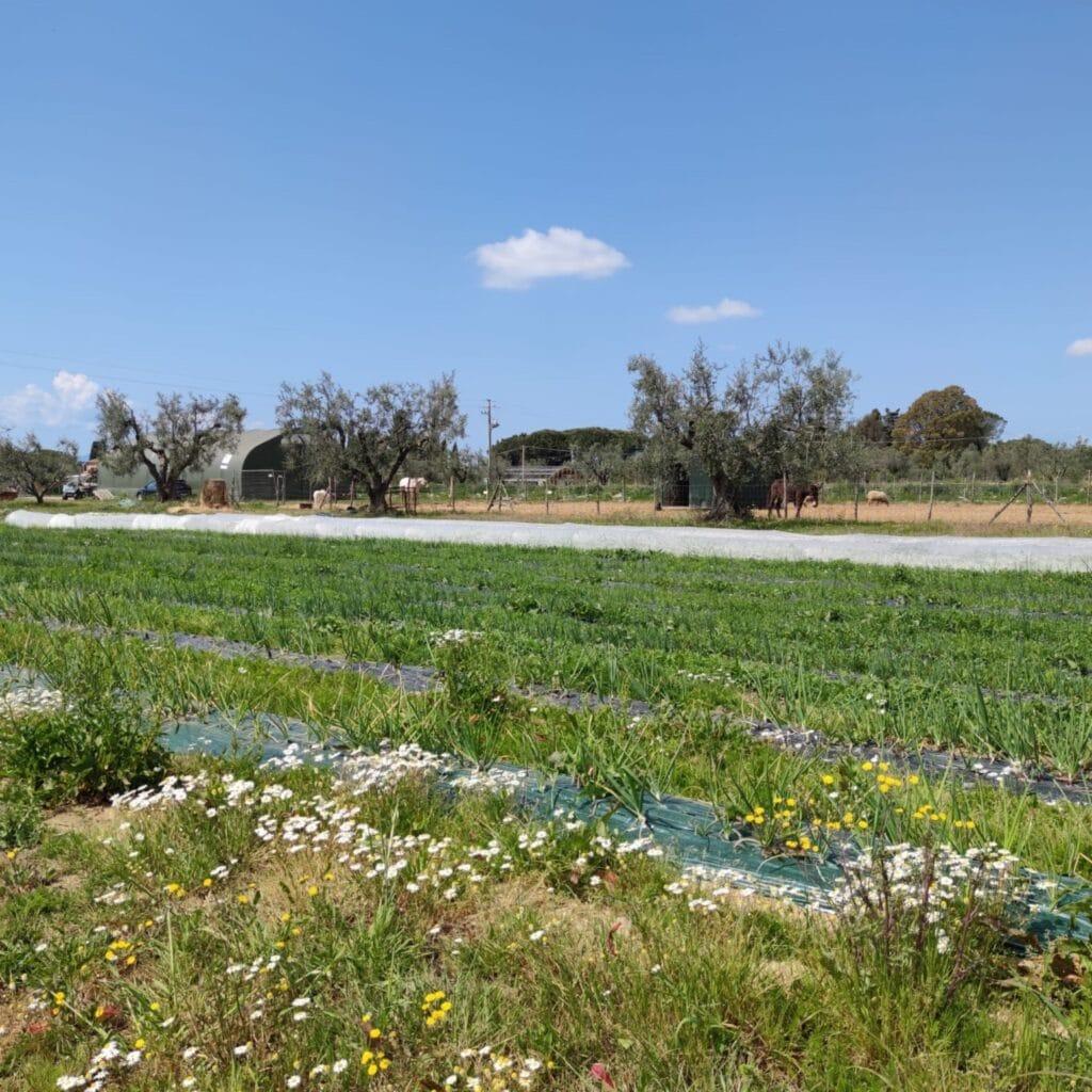Una parte dei campi coltivati