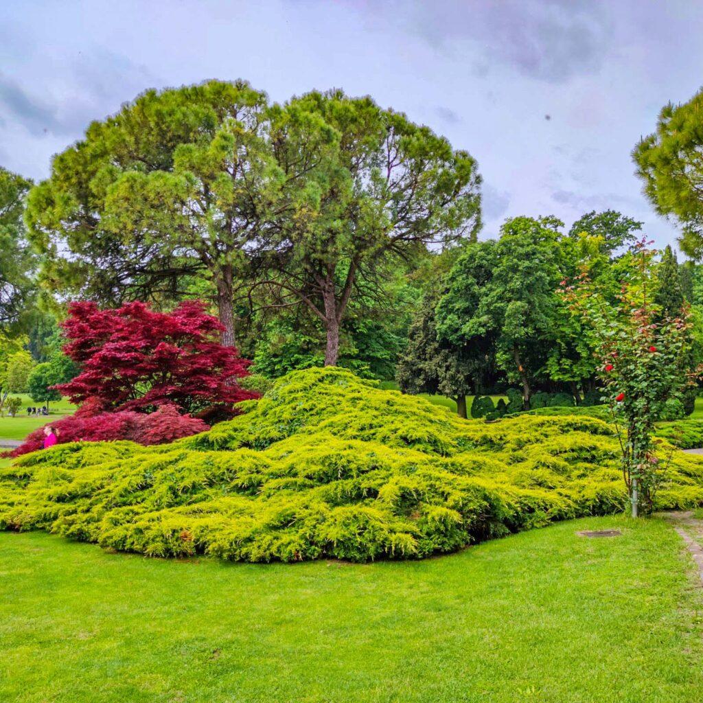 I colori degli alberi del Parco