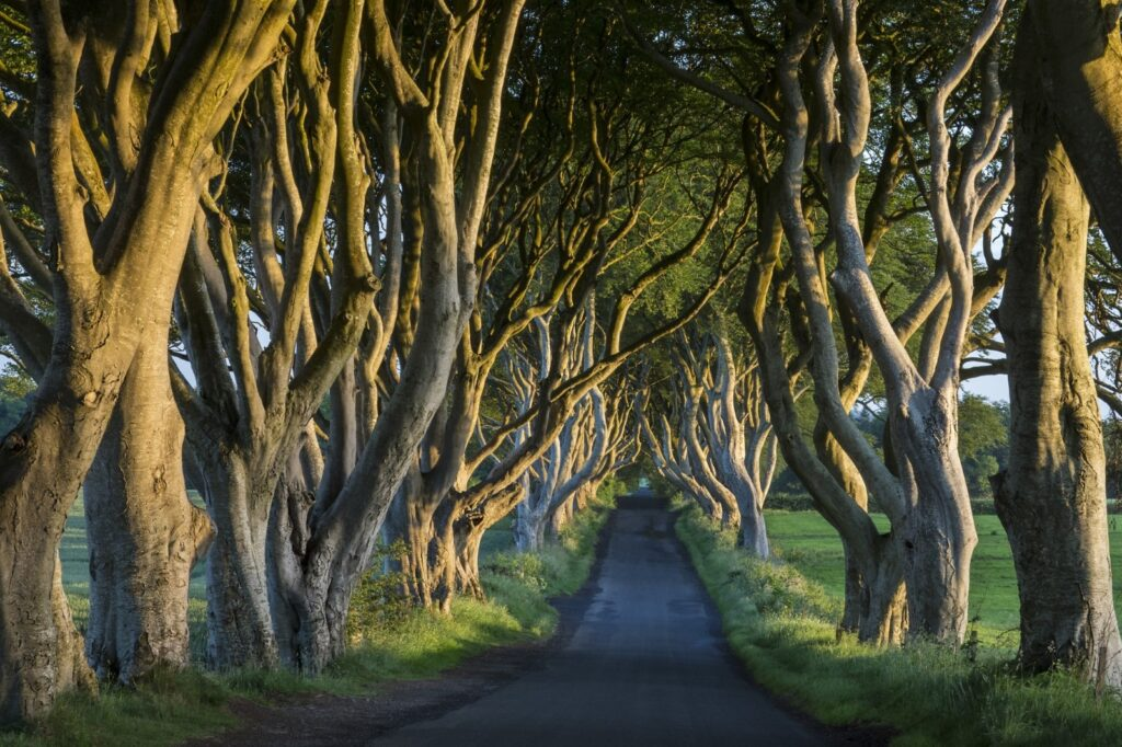 the dark hedges in Irlanda