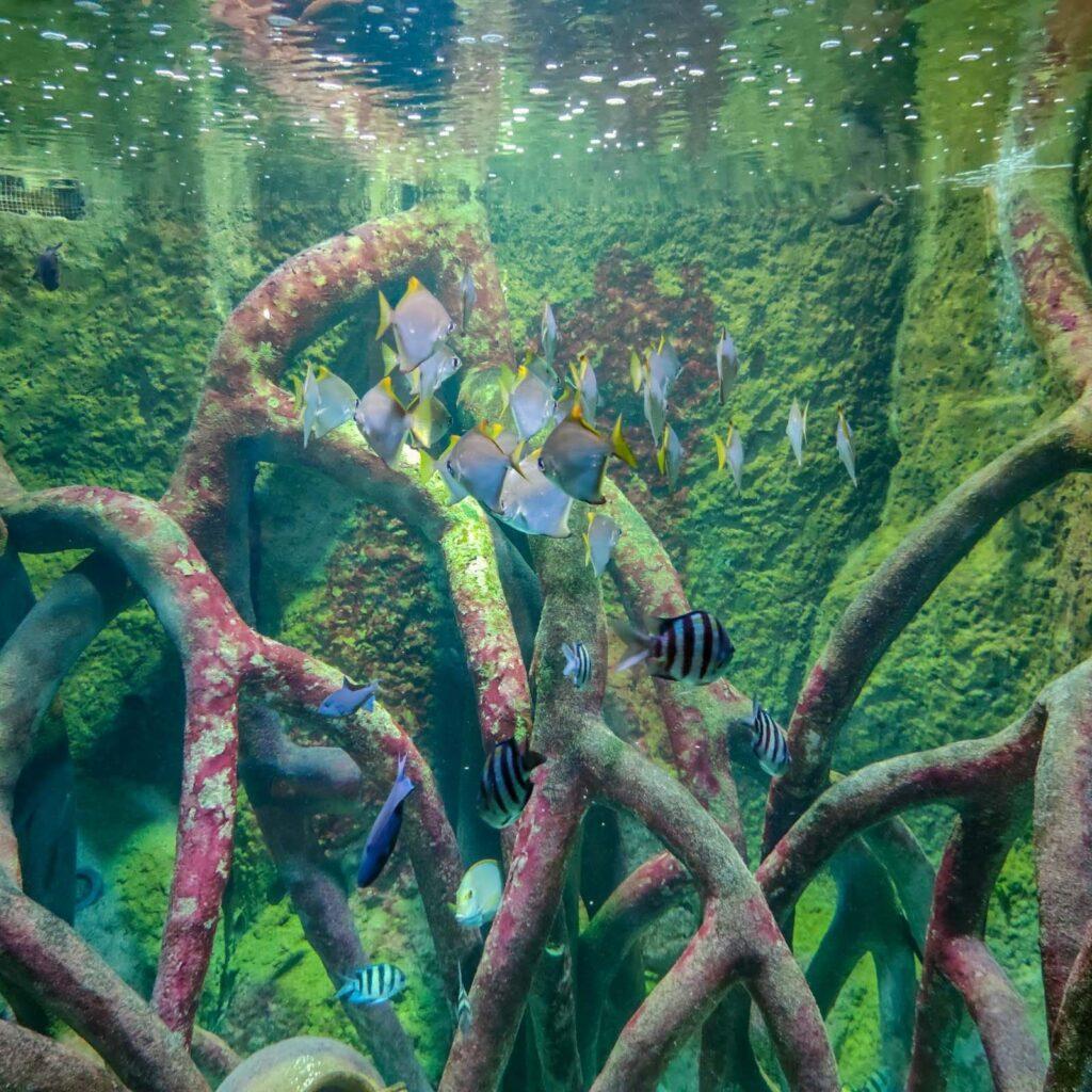 pesci che nuotano