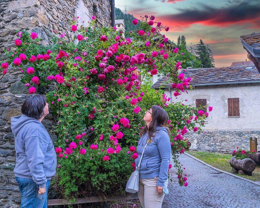 Allemandich e fiori al tramonto