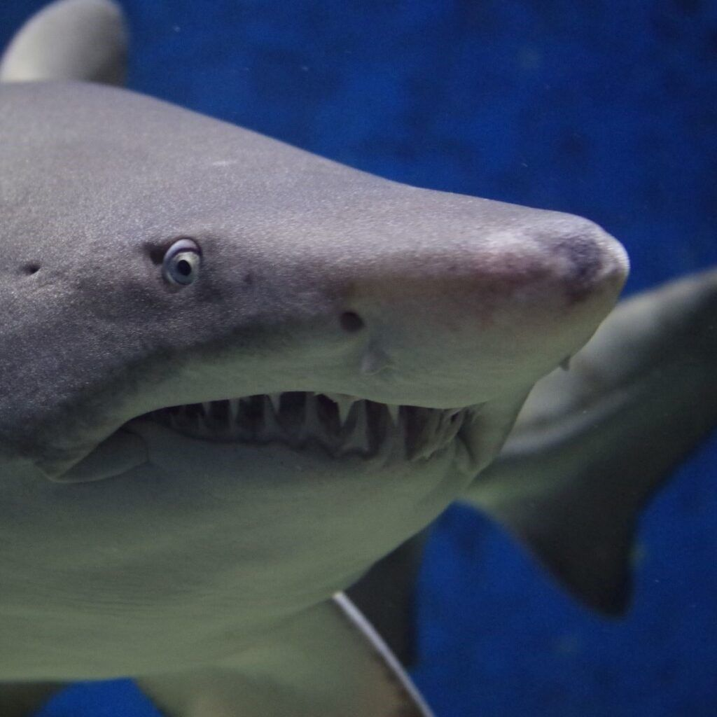squalo all'acquario